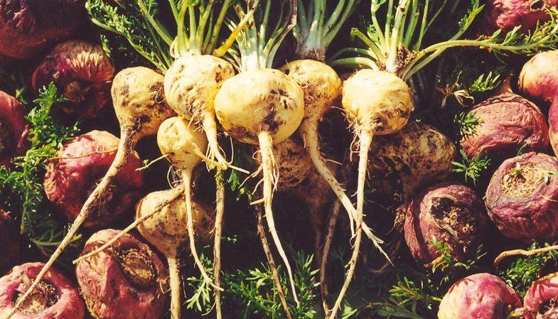 1000 beneficios de la maca